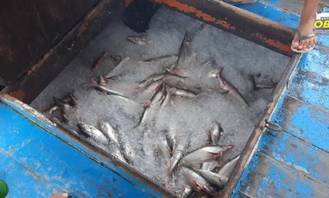 SEMMA Óbidos realiza nova apreensão de pescado | Portal Obidense