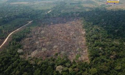 7 municípios dos 11 que mais desmatam a Amazônia estão no Pará | Portal Obidense