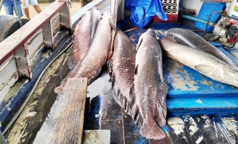 SEMMA apreende pescado no porto de Óbidos | Portal Obidense