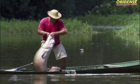 Pirarucu nativo da Amazônia foi encontrado em rio dos EUA, autoridades querem saber como é possível | Portal Obidense