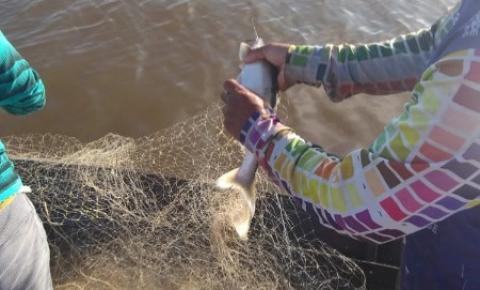 Reportagem especial – Pesca do Mapará no lago do Mamauru em Óbidos | Portal Obidense