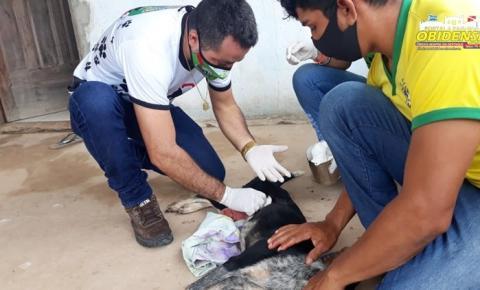 Animal sofre perfuração no abdômen e o fato chama atenção pela crueldade | Portal Obidense