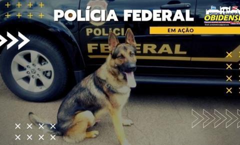 Polícia Federal prende estrangeira por tráfico de drogas no Aeroporto de Manaus | Portal Obidense