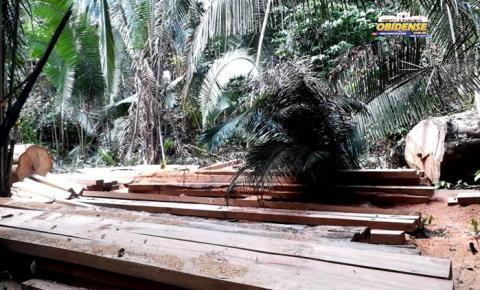 Moradores da comunidade Cruzeirão em Óbidos, denunciam extração de madeira ilegal | Portal Obidense