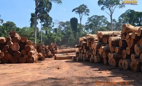 Pesquisa da Ufopa sobre impacto da exploração florestal é publicada na Animal Conservation | Portal Obidense