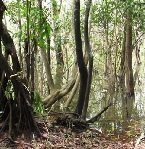 A fonte do lago Geretepaua ou Bica, como era conhecido por muitos obidenses, está desaparecendo aos poucos.