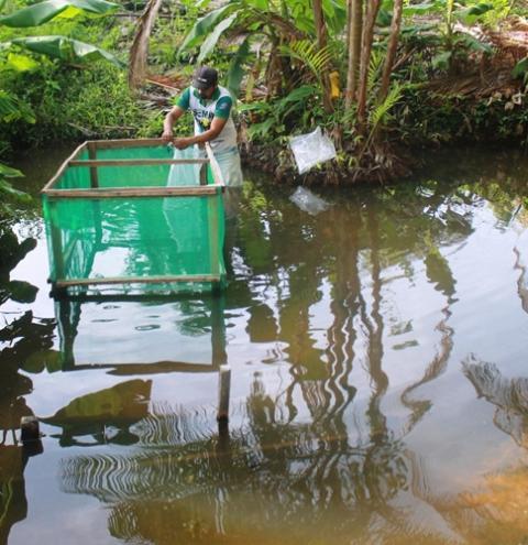 Fonte de renda - Alevinos são levados a comunidade rural de Óbidos   Portal Obidense