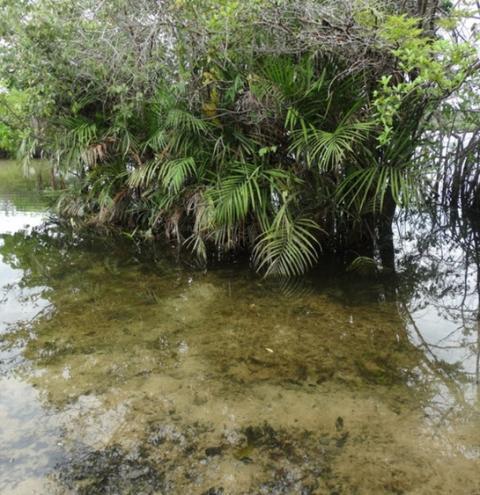 Nova espécie e novo gênero de alga foram descobertos em Santarém   Portal Obidense